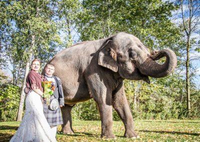 elephant-wedding-safari