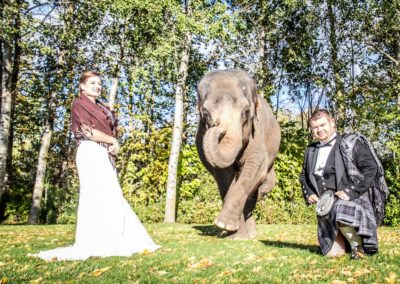 elephant-with-bride-groom